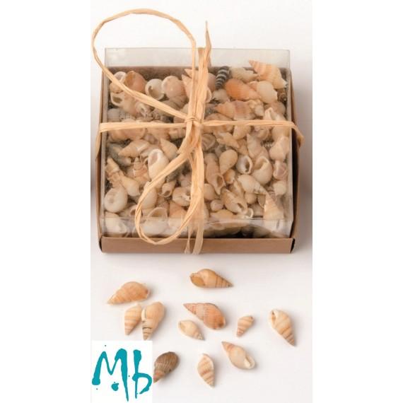 Assortiment de coquillages N.2 - 100 g