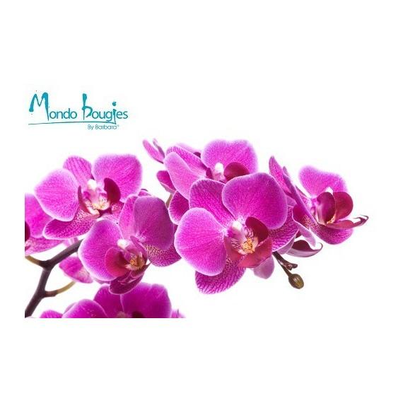 Parfum pour bougies Orchidée