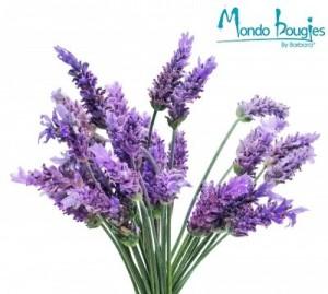 Parfum pour Bougies Lavande - Mondo Bougies